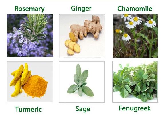 best anti inflammatory herbs