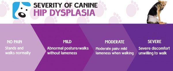 hip dysplasia symptoms in dogs
