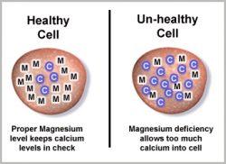 calcium to magnesium ratio
